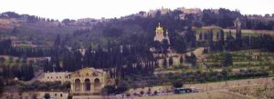 The Garden of Gethsemane on the Mt. of Olives.
